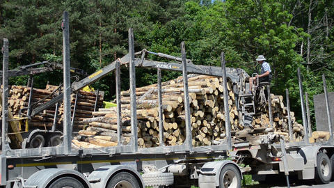 Man with special equipment load truck trailer with wood logs Live Action