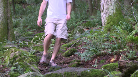 Ferns among the trees in a forest (2 of 3) Footage