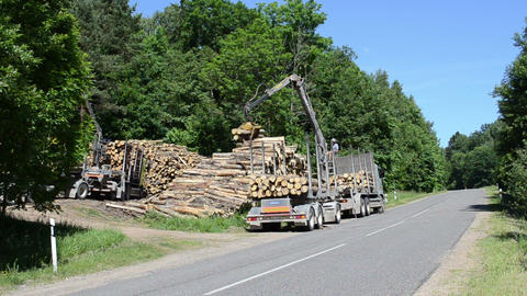 forest workers manage clippers brings logs loading trailer Footage