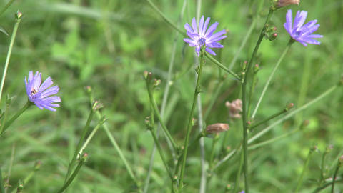 Purple wildflowers (1 of 2) Footage