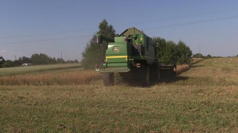 Harvester machine thrash peas plants. Stork birds Footage