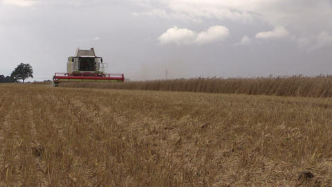 Combine harvester harvesting field of wheat on cloudy day Footage