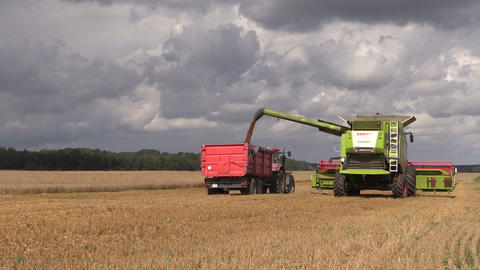 corn harvest on farm pouring wheat into tractor trailer Footage
