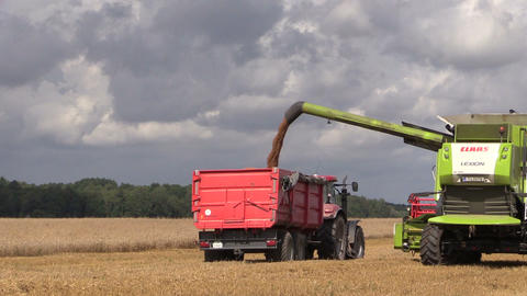farm harvester pour corn after threshing on blue sky background Footage