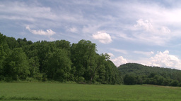 A cluster of trees with blue skies and clouds moving by Footage