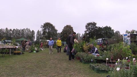 Farmer merchant woman sell fruit tree plants in botanical fair Footage