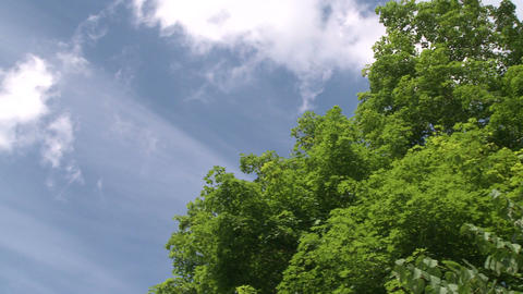 Looking above the trees to blue skies and white fluffy clouds (1 of 2) Footage