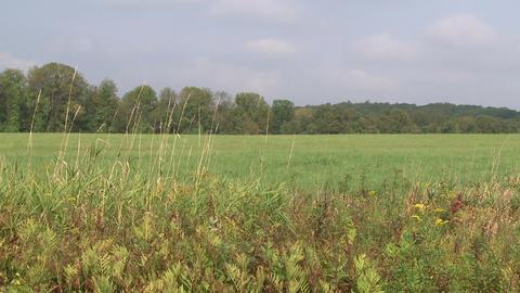 Looking across a grassy field (2 of 2) Footage
