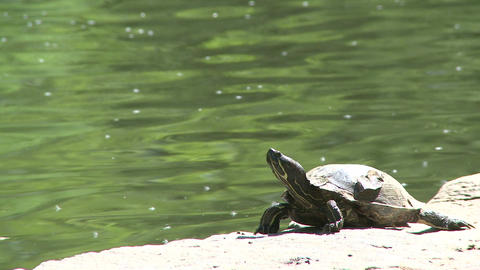 Small turtle enjoying the water (3 of 6) Footage