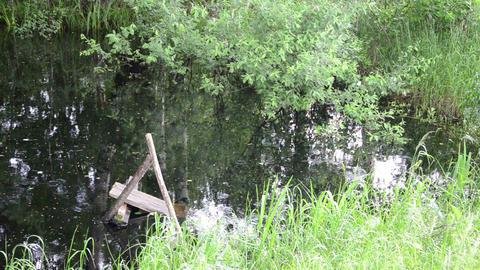 tree leaning on pond bridge crack strong raining Footage