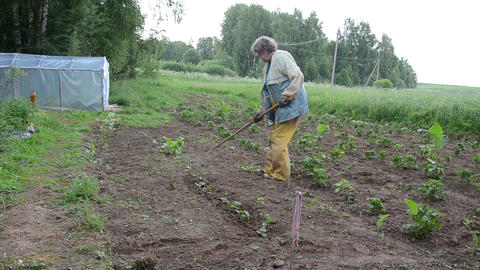 grandmother handles hoe zucchini seedlings beds Live Action
