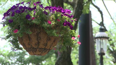 Hanging flower basket along the sidewalk Live Action