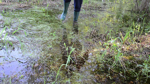 forester wade through the overgrown grass slimy swamp forest Footage