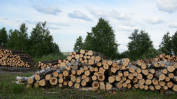 Panorama of firewood fuel birch and pine logs stacks near forest Footage