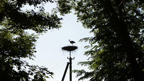 Dark stork bird silhouette fly away from nest electricity pole Footage