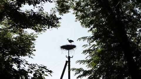 Dark stork bird silhouette fly away from nest electricity pole Footage
