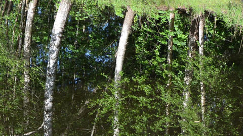 Ripple lake water surface and birch tree forest reflections Footage