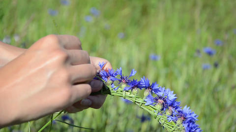 girl hands gather bluebottle flowers and make crown wreath Footage