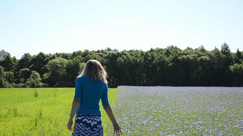 Pretty woman girl walk meadow and cornflower field pick bloom Footage