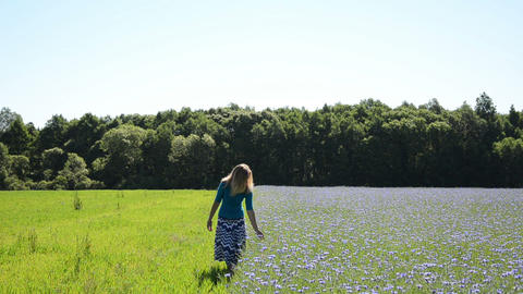 woman walks large field cornflower brushes hand floral blossom Footage
