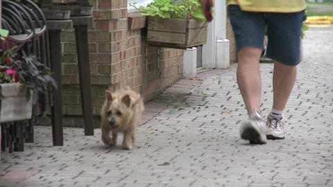 A person walking their dog downtown. (1 of 3) Footage