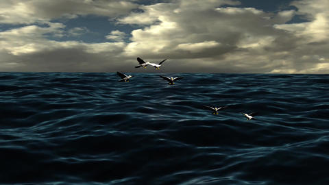 Natural Ocean Wave With Flying Flock Bird Footage
