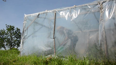 female farmer girl watering vegetable plants in greenhouse Footage
