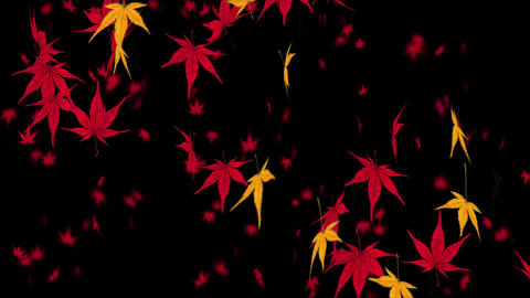 Falling Japanese maple leaf 1 Animation