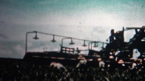 (8mm Vintage) 1955 Hawaiian Pineapple Harvest Cannery stock footage