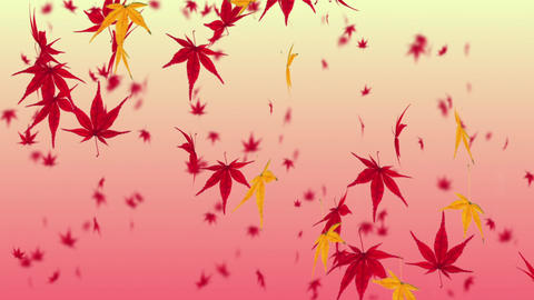 Falling Japanese maple leaf 4 Animation