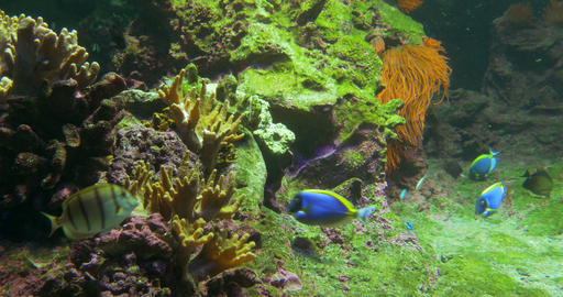 Tropical Fish 04 stock footage
