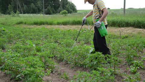 farmer with green spray spraying potato colorado beetle weed Live Action