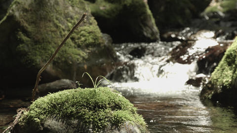 beautiful stream with old rocks zoom up Footage