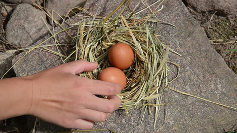Hand gather fresh eggs from chicken hen nest place in rural farm Footage
