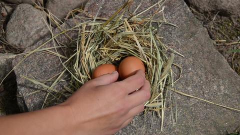 Hand lie fresh eggs to chicken hen nest place in rural farm Footage