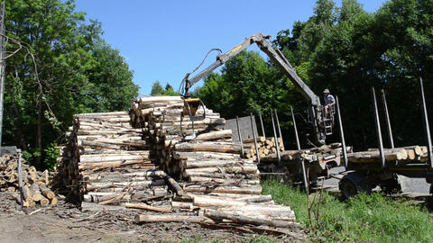 Man load felled trees logs with crane to trailer transportation Footage