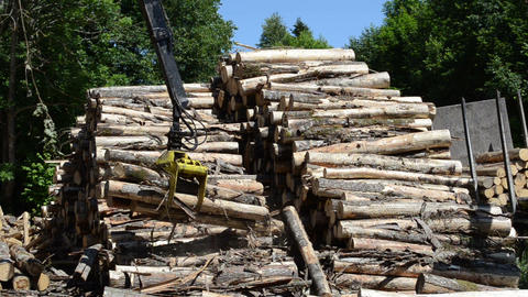 Stack of dry felled tree logs and crane claw grab lift firewood Live Action