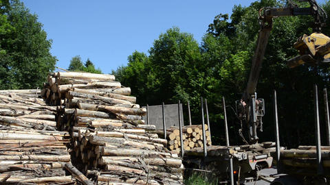 Man load fell trees logs with crane to trailer transportation Footage