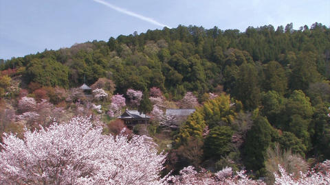 Spring landscape in Mt.Yoshino,Nara Japan Stock Video Footage