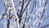 Snow and Tree branches,Biei,Hokkaido,Japan Footage