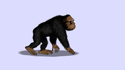 GORILLA WALK Animation