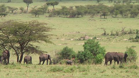 Elephants Stock Video Footage
