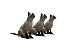 立つ猫 Animation
