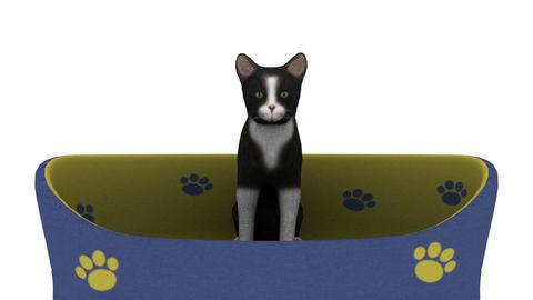 猫ジャンプ Stock Video Footage
