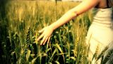 Hand running through wheat field Freedom hand green organic agriculture Wheat Harvesting Landscape C Footage