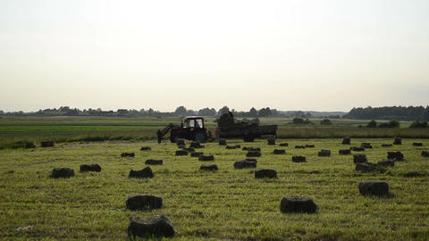 workers loading the trailer dry compressed hay packet Footage