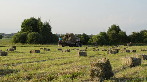farmers peasants load dried hay bales to tractor trailer Footage