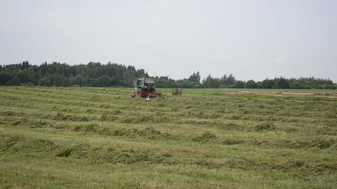 Stork bird and tractor turning raking cut hay in field Footage