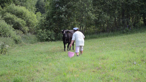 farmer goes with buckets tied to black cow in the meadow Footage