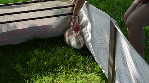 Cute rabbit in yard on grass and woman caress animal Footage